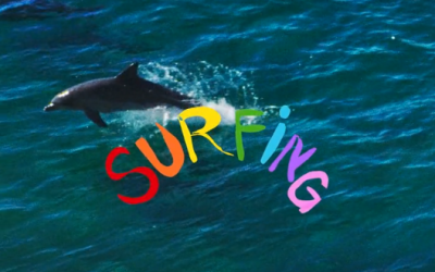 A discussion with Gold Coast film dynamo Dan Scott on his latest movie/masterpiece, 'Surfing'