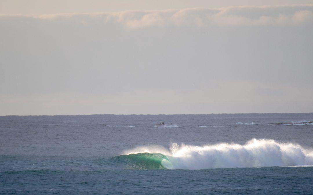 SURFING NSW OFFICE CLOSURE