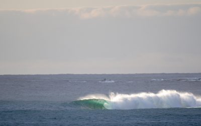 SURFING NSW OFFICE CLOSURE